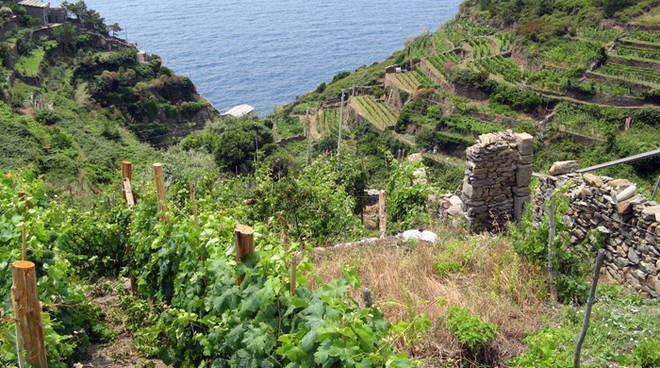 riviera24 - Agricoltura ligure