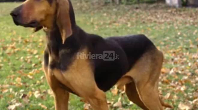 riviera24 - Animali di terzo spot del Festival