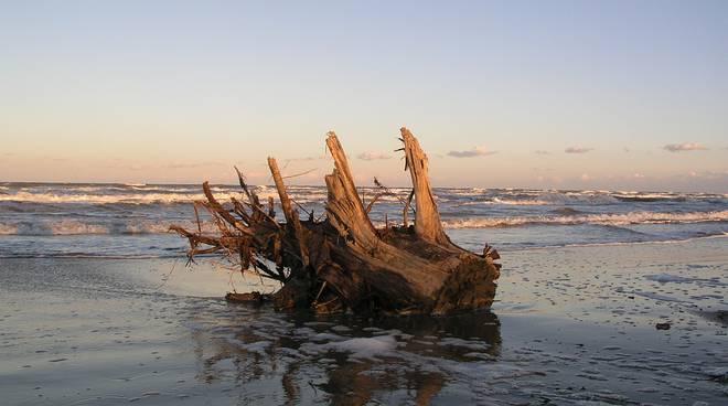 riviera24 - legname su spiaggia generica