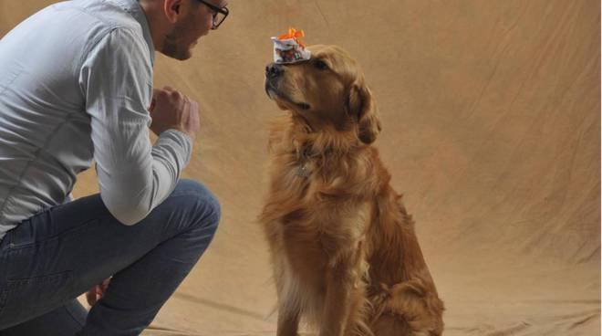 Charlie, il cane che gioca a pallavolo