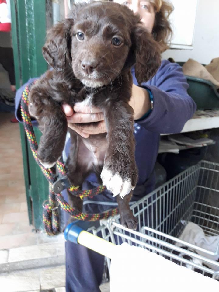 Cuccioli in adozione a ventimiglia