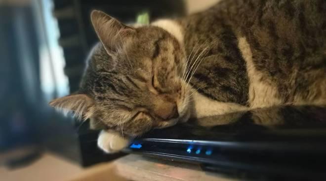 Gatto, Giornata mondiale del gatto