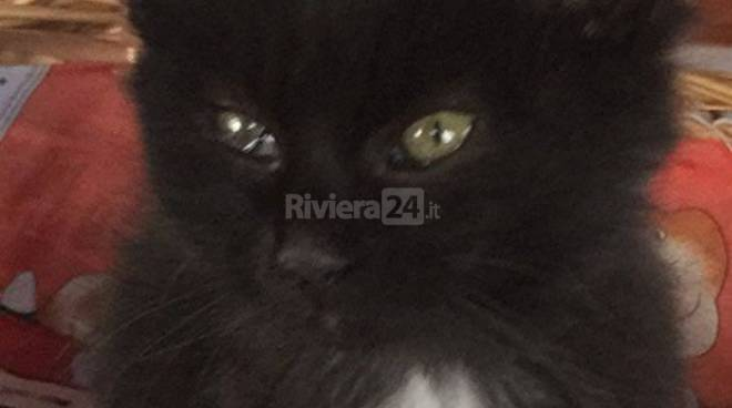 riviera24 - Gatboys