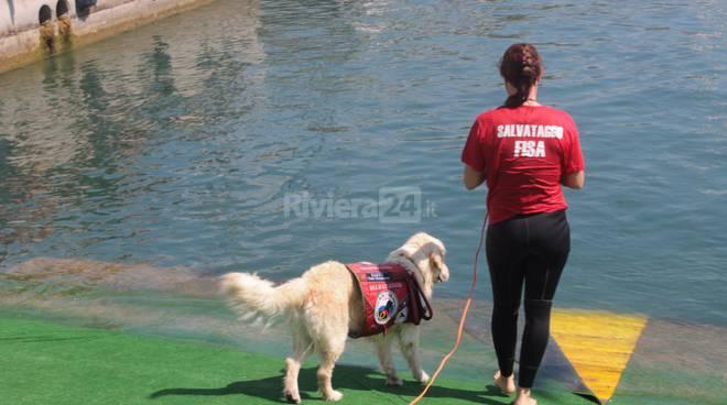 """Riviera24 - """"Bagnini a 4 zampe"""" danno una dimostrazione salvataggio in acqua"""