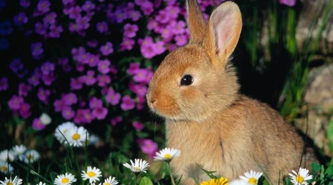 coniglio da giardino