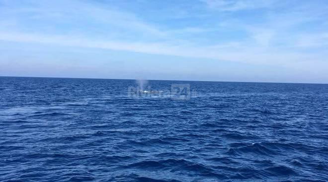riviera24 - Balenottera