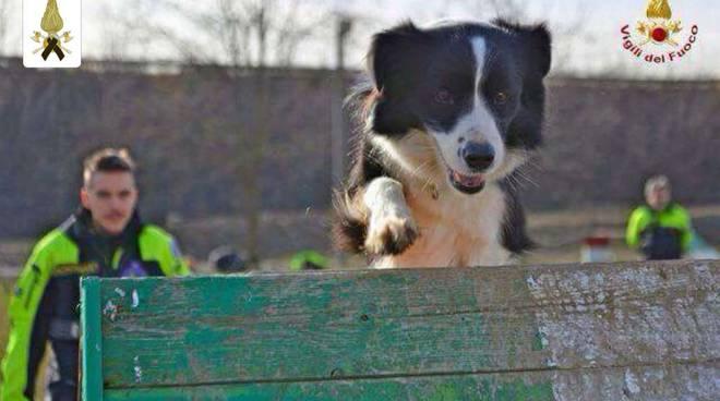 Vigili del fuoco: morta Camilla, cane del nucleo cinofilo
