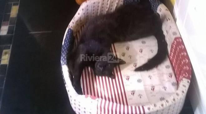 riviera24 - Gatto scomparso a Bordighera