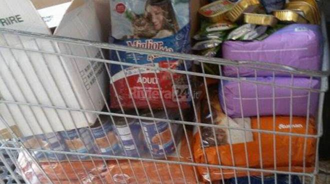 raccolta cibo canile