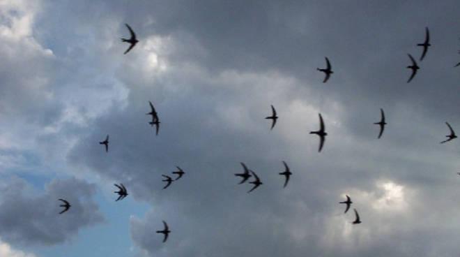 Le Rondini Si Preparano Già Al Viaggio Il Rituale Della Migrazione