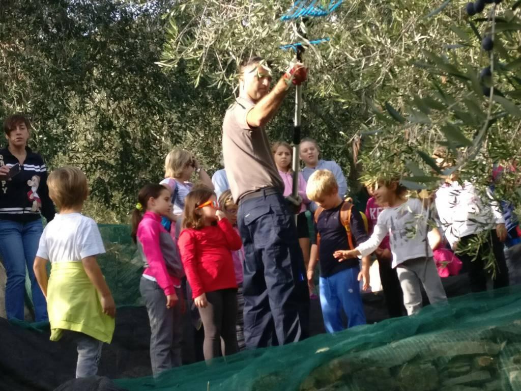 riviera24 - Camminata tra gli olivi a Chiusavecchia
