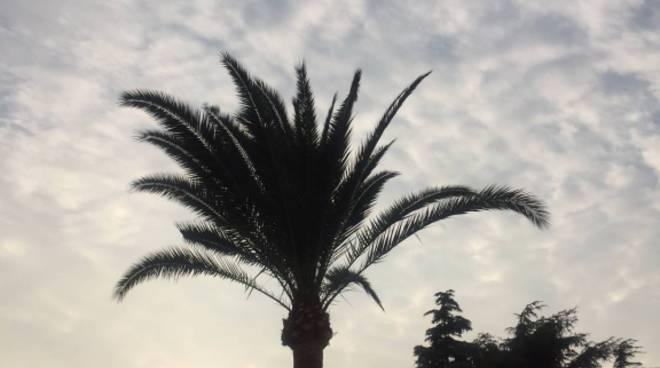 """riviera24 - Collettiva """"per le palme perdute"""" all'oratorio San Bartolomeo"""