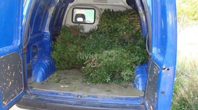 riviera24-furto verde ornamentale