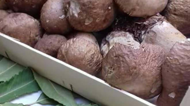 riviera24 - Sagra del fungo di Pigna