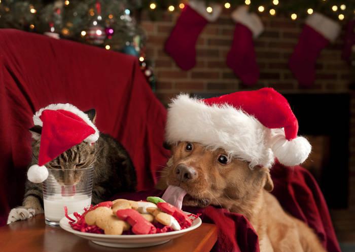 Natale cani e gatti