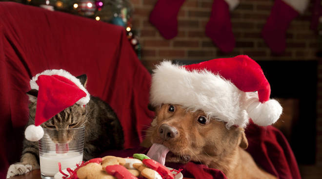 Immagini Natale Cani.Pancake E Roll Di Salmone Ricette Natalizie Per Cani E