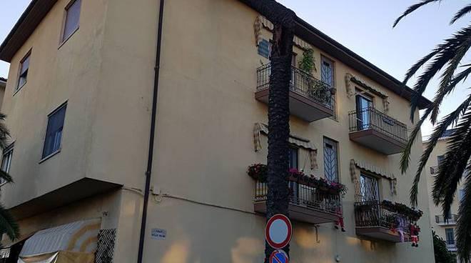 riviera24 - Arma di Taggia, vento spezza palma che si abbatte su palazzina