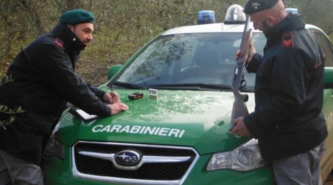riviera24 - carabinieri forestale