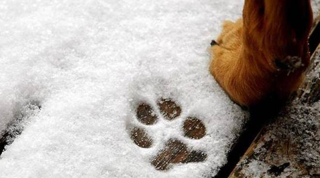 Cane freddo, neve