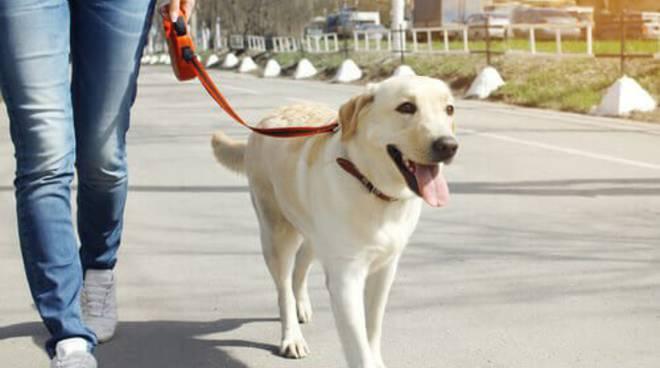 Passeggiare con il cane