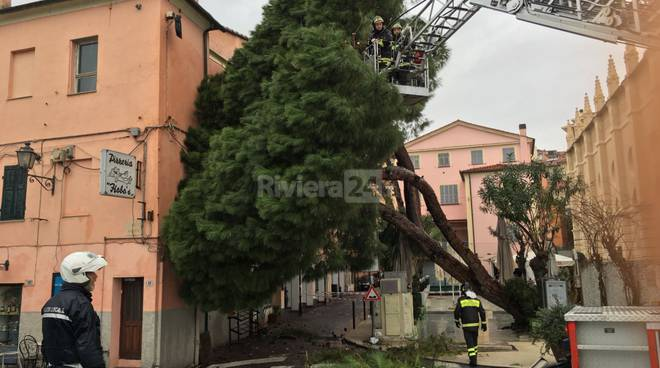 riviera24 - Imperia, pino marittimo si abbatte su edificio