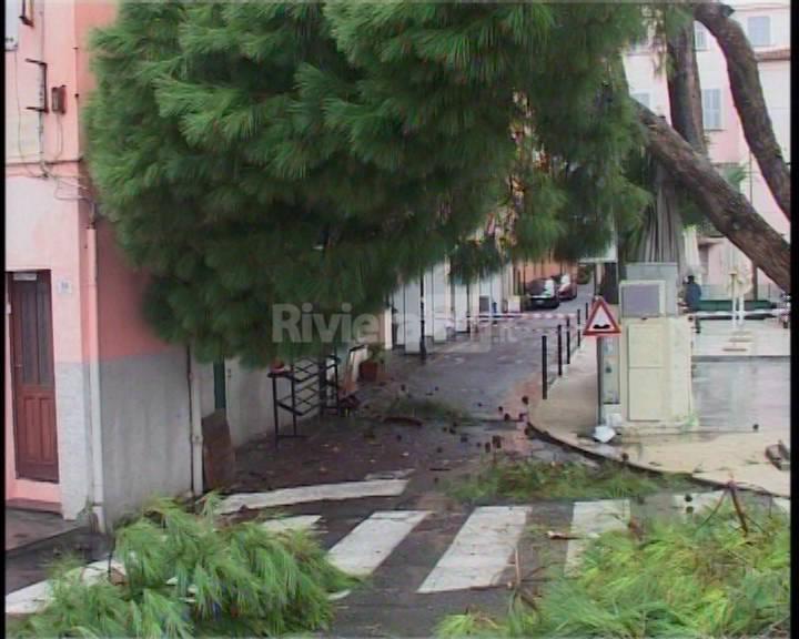 riviera24 - Pino caduto alla marina di porto maurizio