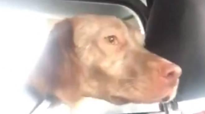 spadino cane