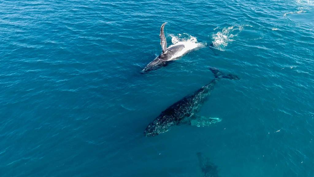 federico infantino balene australia oceano