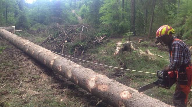 riviera24-  Scuola forestale