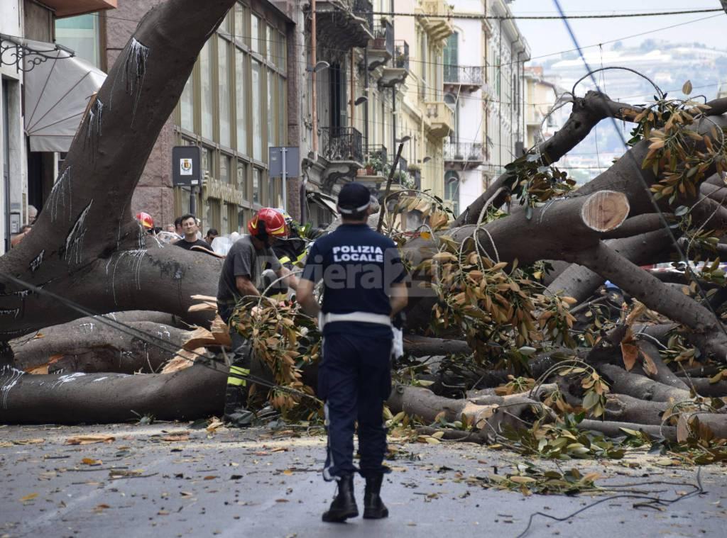 riviera24 - Sanremo, gigantesca magnolia si abbatte su via Roma
