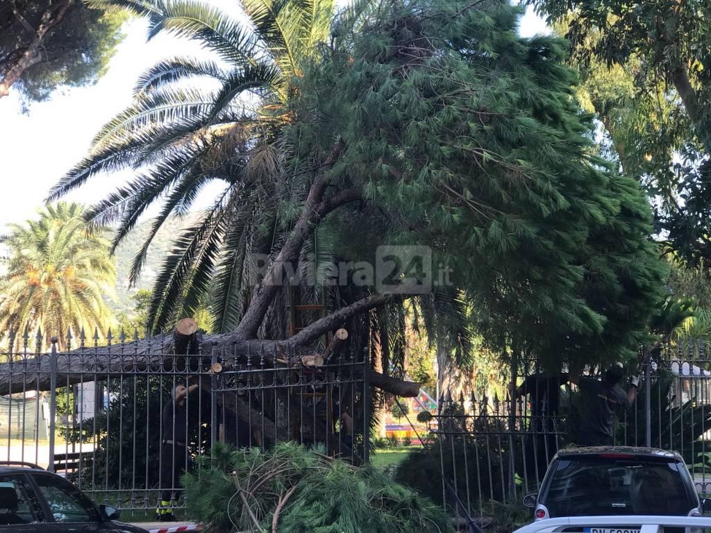 Pini giardini Ventimiglia