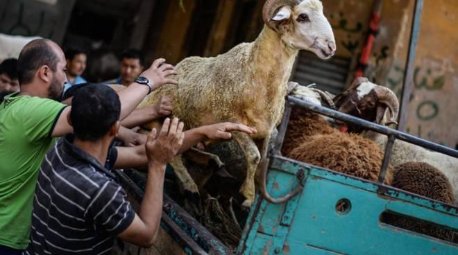 Comunità islamiche a Villa Montalvo per la Festa del sacrificio