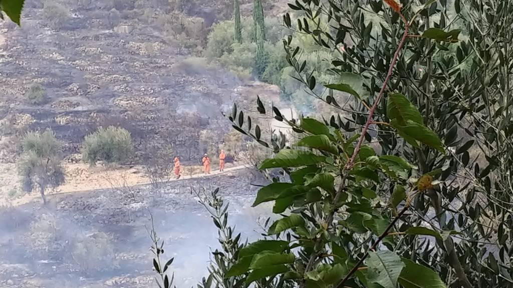 riviera24 - Imperia, incendio a Costa D'Oneglia