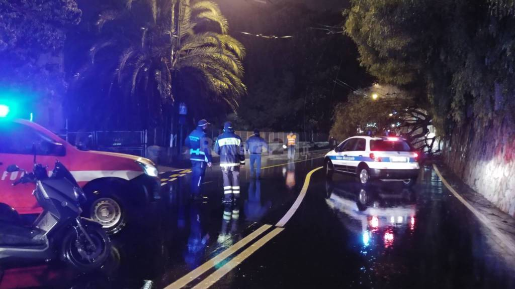 Albero crollato sull'Aurelia a Sanremo