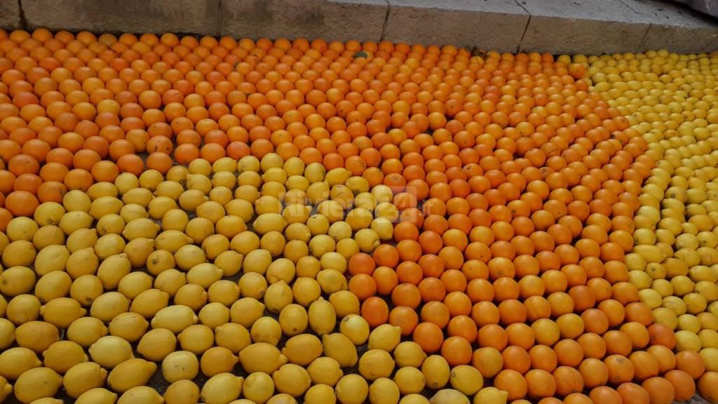 Fete du citron 2019