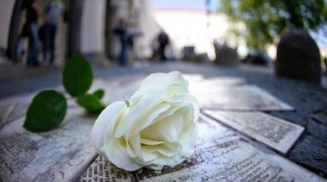 riviera24 - La rosa bianca