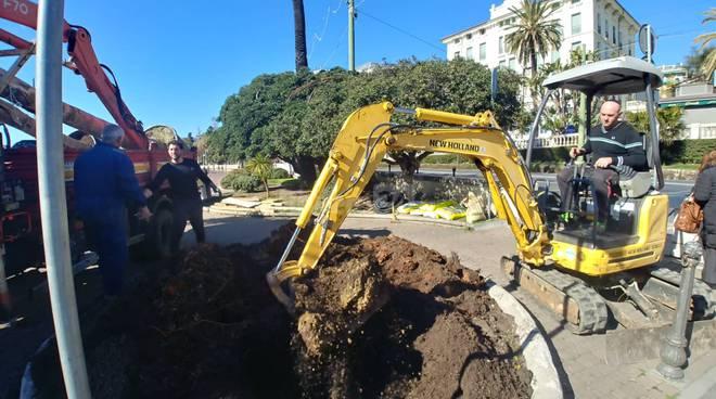 Riviera24- sostituzione piante
