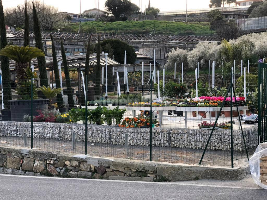 riviera24 - Vivaio di Edoardo Botti