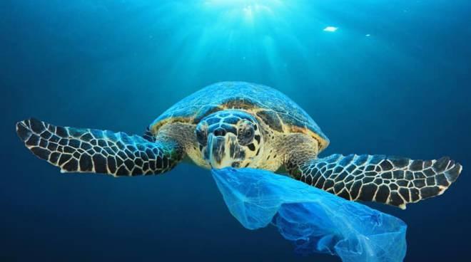 Riviera24- plastica tartaruga