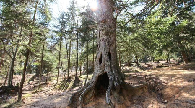 """riviera24 - """"Uno sguardo nel bosco"""""""