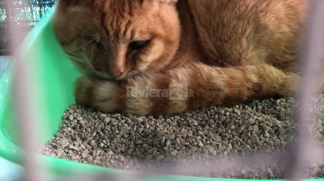 bob gatto bordighera