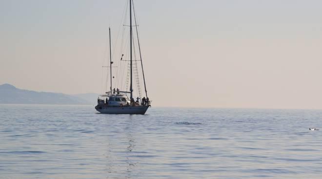 riviera24 -  Santuario Pelagos