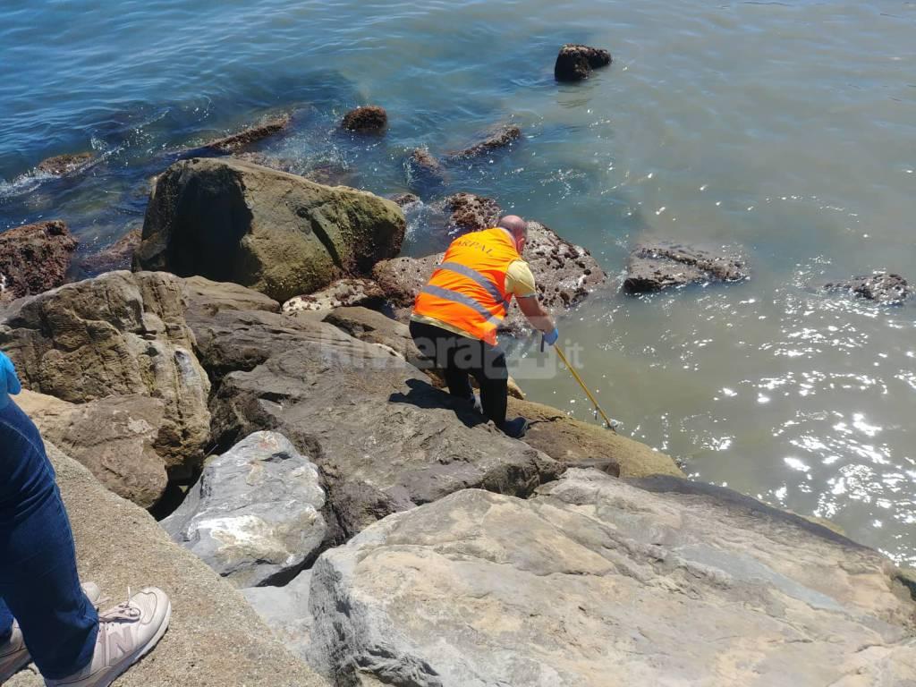 Riviera24- sversamento porto vecchio