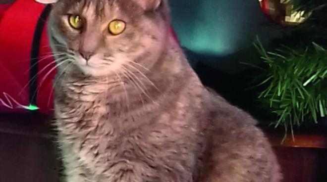 Gatta smarrita a San biagio (Per la redazione: mi scuso di dover rimandare la notizia, ma l\'immagine precedente aveva la testa del gatto fuori dall\'immagine!)