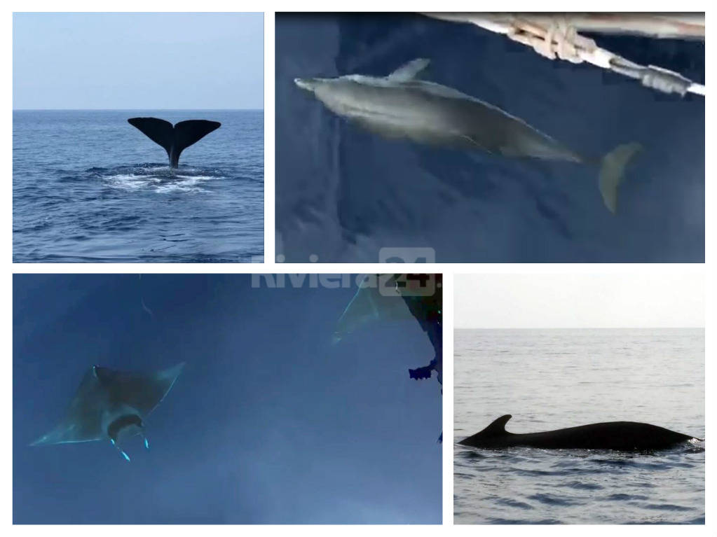 riviera24 - cetacei collage