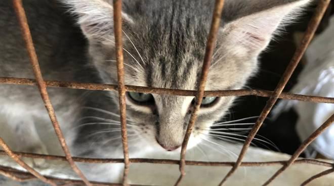 Riviera24- gattile di Ventimiglia
