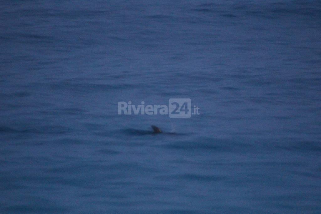 Salvataggio cucciolo delfino