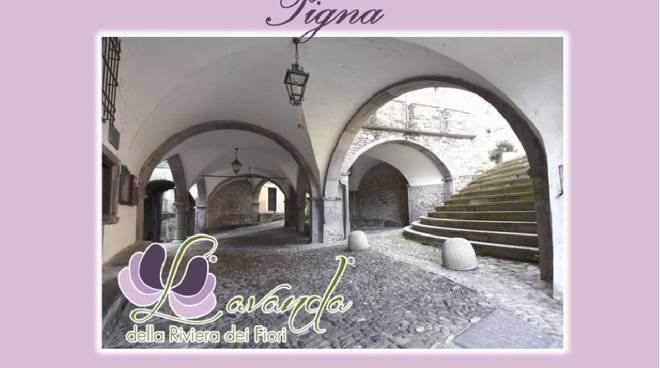 riviera24 - Lavanda a Pigna