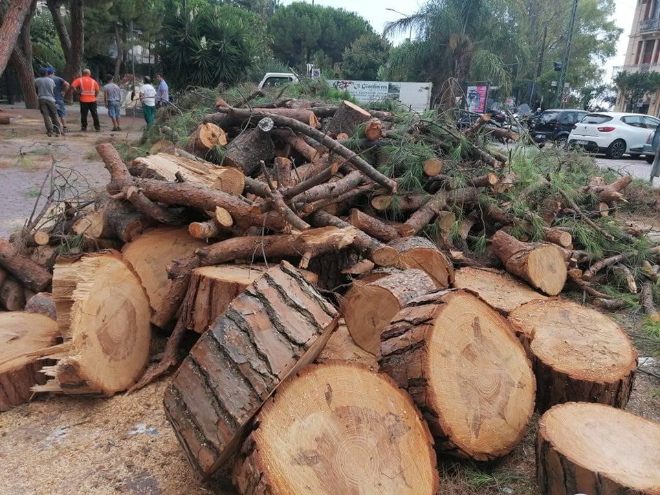 alberi tagliati ospedaletti