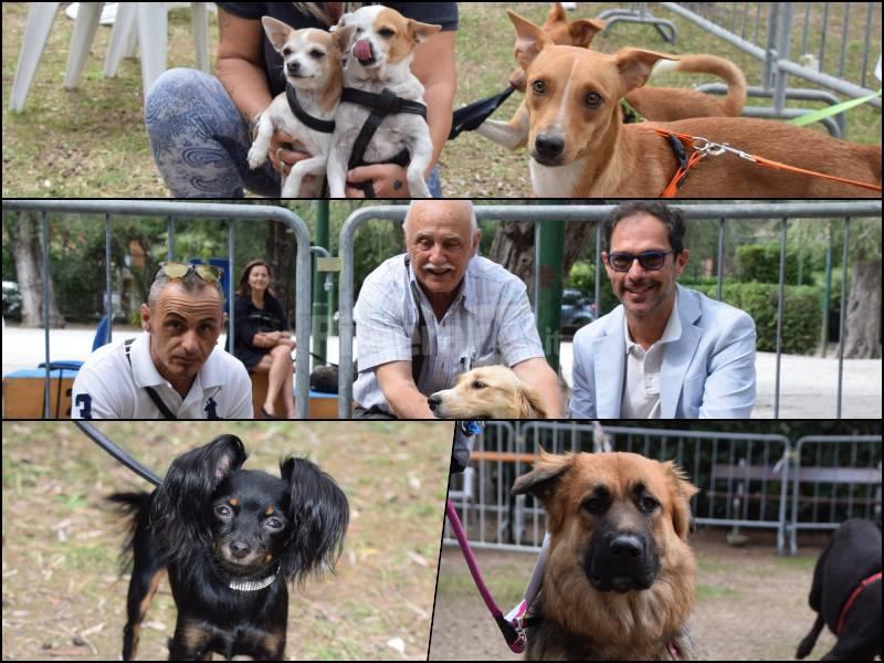 Bordighera Dog Show